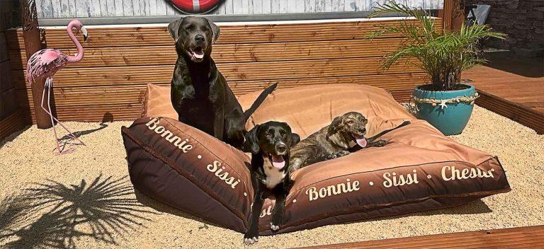 Über petsbeds Bonnie Chester und Ouzo im Hundeloungekissen