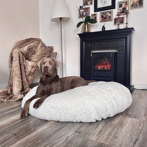 Hund im gemütlichen Wolkentraum Bett